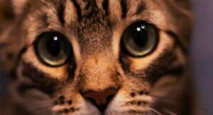 Read more about the article International Homeless Animals' Day